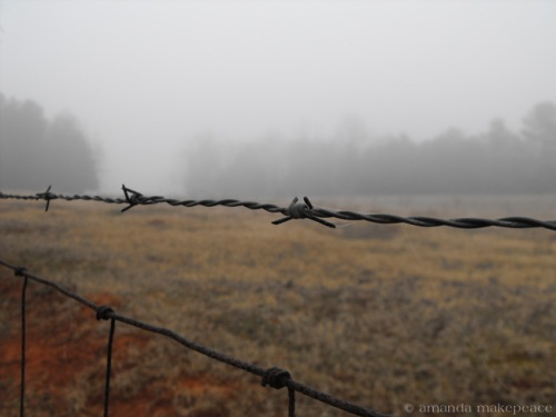 Barb Wire Fence and the Fog