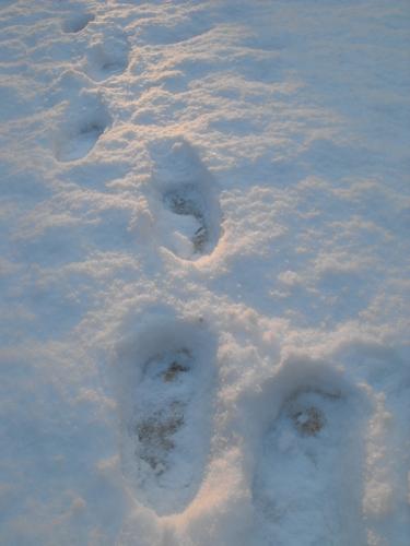 Treking through the snow.