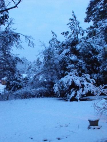 Snow in the pre-dawn hour.