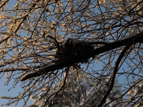 Snow covered bird's nest.