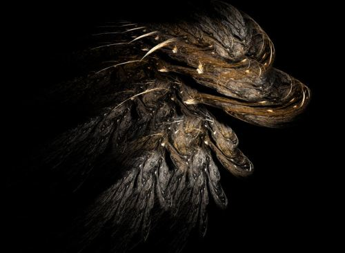 Winter Bark Fractal Art by Ruth Jamieson