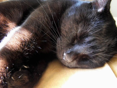 Shadow sleeping in the sunlight.