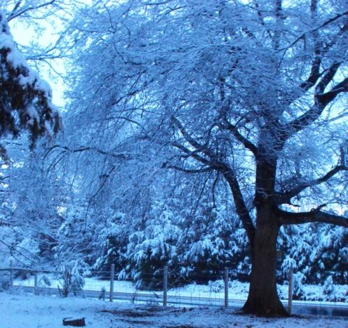 Magical Snow Tree
