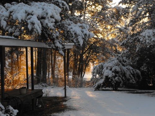 Sunlight, Snow and Trees