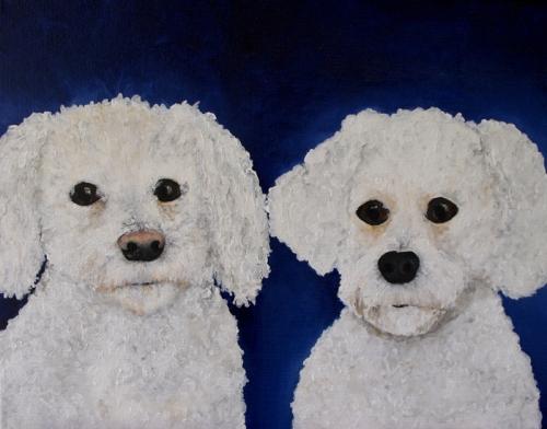 Bichons Frise Pet Portrait