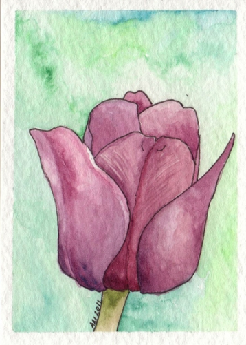 Purple Tulip for IndieGoGo