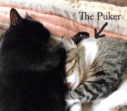 The Puker