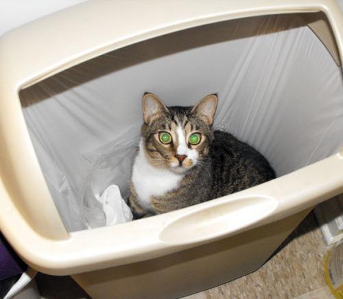 Hunter in the Trash