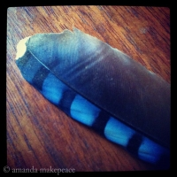Bluejay Feather