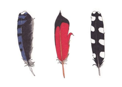 Feathers by Amanda Makepeace